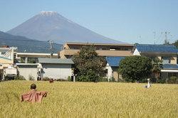 Mt_Fuji_in_Fall