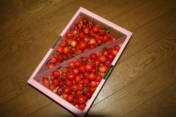 Cherry_2
